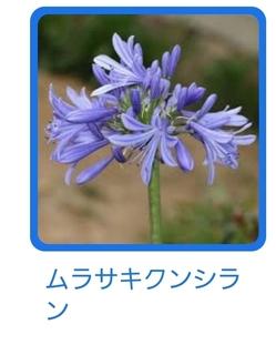 Screenshot_20210623-131019_Google.jpg